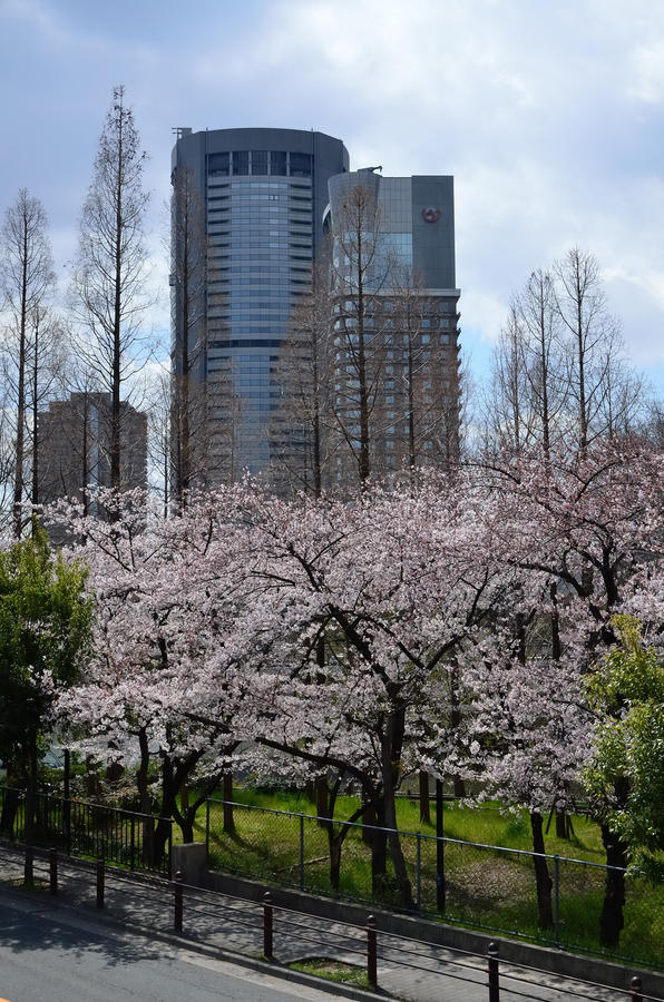 Ανθίζοντας άνθος κερασιών, άνοιξη στην Οζάκα Ιαπωνία στοκ φωτογραφία με δικαίωμα ελεύθερης χρήσης