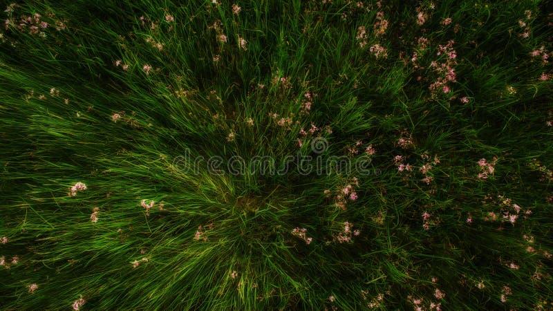 ανθίζοντας άνοιξη λουλουδιών πεδίων στοκ εικόνες