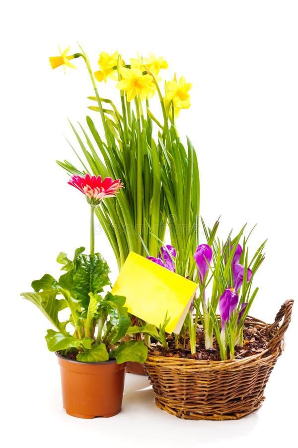 ανθίζοντας άνοιξη φυτών στοκ φωτογραφία με δικαίωμα ελεύθερης χρήσης
