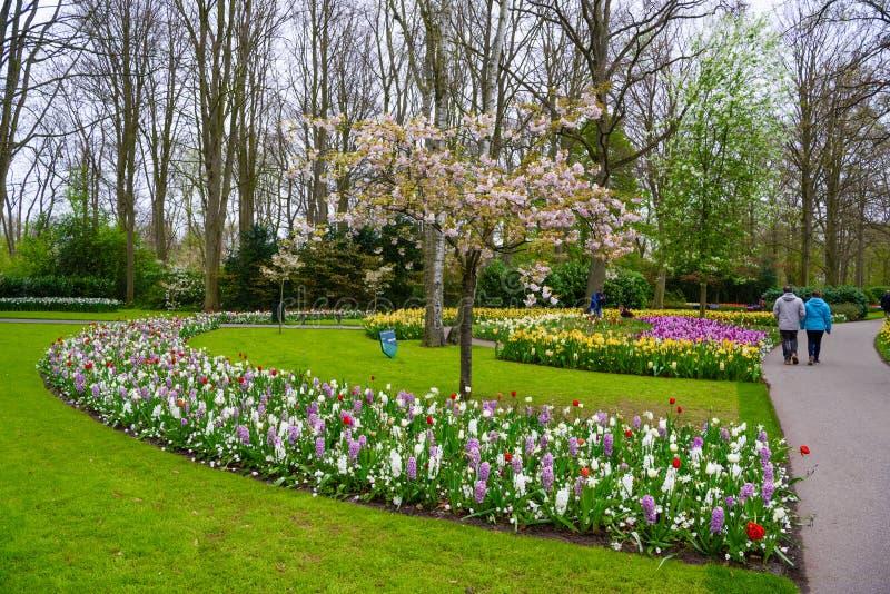 Ανθίζοντας δέντρο μηλιάς και τουλίπες στο πάρκο Keukenhof, Lisse, Ολλανδία, Κάτω Χώρες στοκ εικόνες με δικαίωμα ελεύθερης χρήσης
