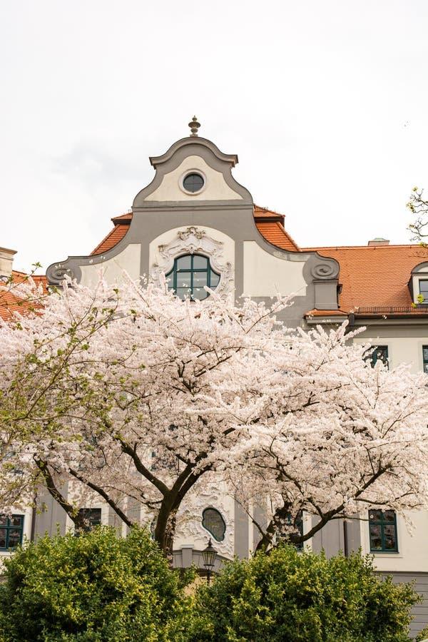 Ανθίζοντας δέντρο σε μια κυβέρνηση που χτίζει το Άουγκσμπουργκ στοκ εικόνες