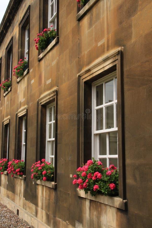 Ανθίζοντας γεράνι στην παράθυρο-στρωματοειδή φλέβα του πανεπιστημίου στην πόλη Καίμπριτζ στην Αγγλία στοκ φωτογραφία με δικαίωμα ελεύθερης χρήσης