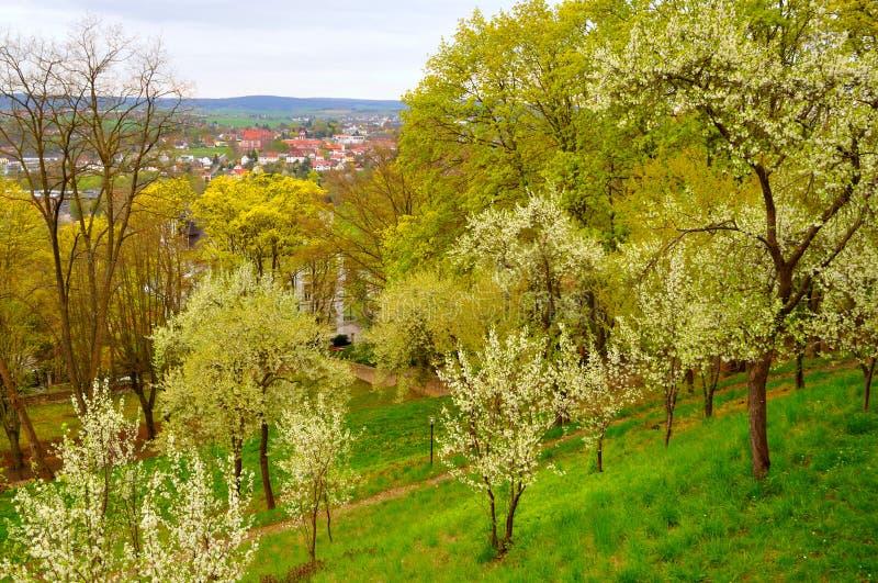 Ανθίζοντας δέντρα κερασιών στον κήπο κοντά στο μοναστήρι ατόμων σε ένα Frauenberg σε Fulda, Hesse, Γερμανία στοκ φωτογραφία