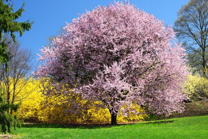 ανθίζοντας δέντρα στοκ εικόνες