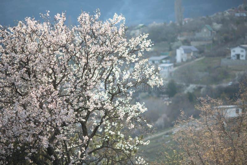 Ανθίζοντας δέντρο άνοιξη με μια γραφική άποψη του χωριού στα βουνά στοκ φωτογραφίες με δικαίωμα ελεύθερης χρήσης