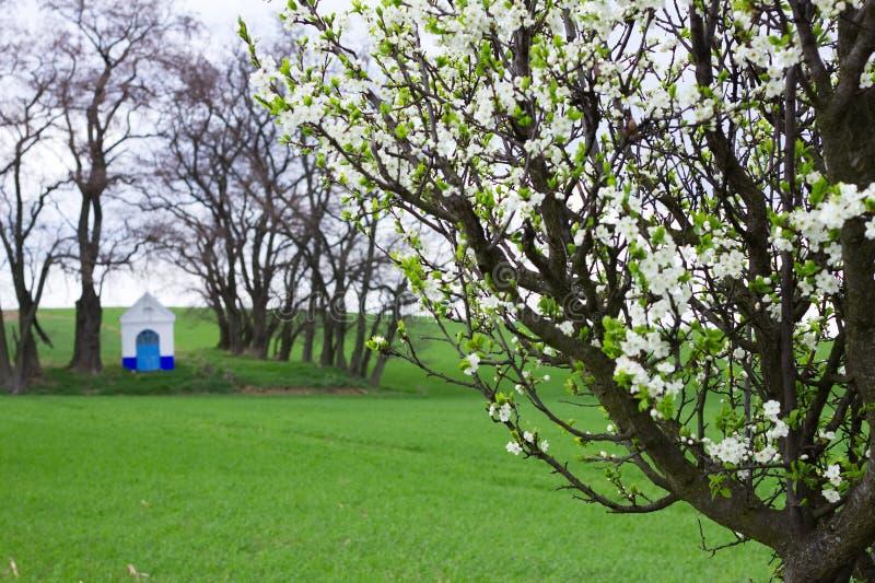 ανθίζοντας δέντρο δαμάσκηνων Τοπίο παρεκκλησιών της Barbara Santa στην άνοιξη στο υπόβαθρο στοκ εικόνες