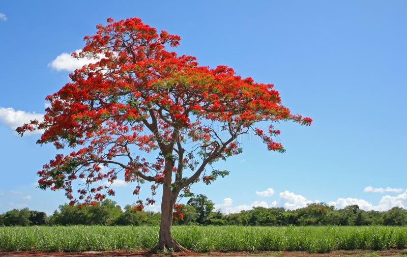 ανθίζοντας δέντρο στοκ εικόνες με δικαίωμα ελεύθερης χρήσης