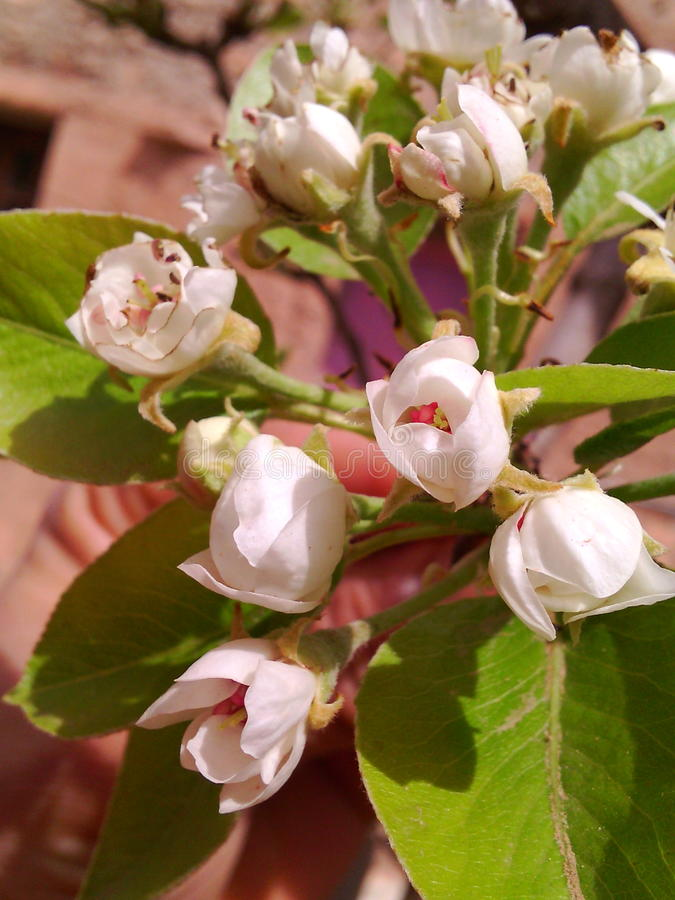ανθίζοντας ηλίανθος σπόρων λουλουδιών ανασκόπησης στοκ φωτογραφία με δικαίωμα ελεύθερης χρήσης