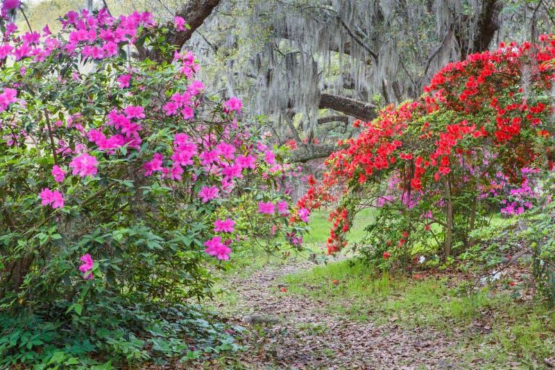 Ανθίζοντας κήπος αζαλεών στοκ εικόνες