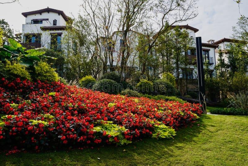 Ανθίζοντας κήπος πριν από τα κτήρια κατοικιών το ηλιόλουστο χειμερινό μεσημέρι στοκ εικόνα