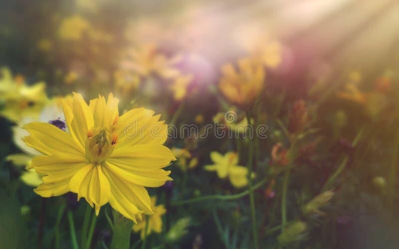 Ανθίζοντας κίτρινο εκλεκτής ποιότητας υπόβαθρο λουλουδιών στοκ φωτογραφία με δικαίωμα ελεύθερης χρήσης
