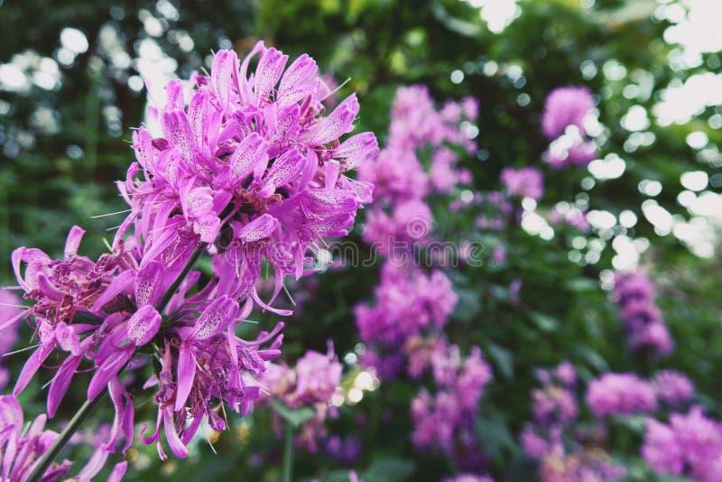 Ανθίζοντας λουλούδια και δέντρο στο θόλο λουλουδιών στους κήπους από  στοκ εικόνα