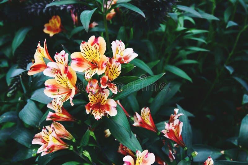 Ανθίζοντας λουλούδια και δέντρο στο θόλο λουλουδιών στους κήπους από  στοκ φωτογραφία με δικαίωμα ελεύθερης χρήσης