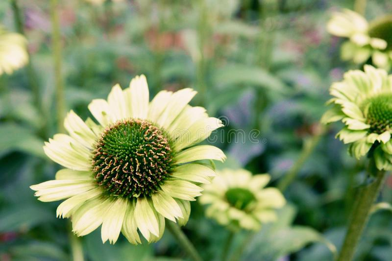 Ανθίζοντας λουλούδια και δέντρο στο θόλο λουλουδιών στους κήπους από  στοκ εικόνες με δικαίωμα ελεύθερης χρήσης