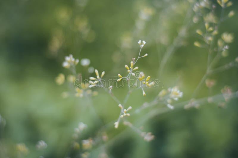 Ανθίζοντας μικρά λουλούδια στοκ εικόνα
