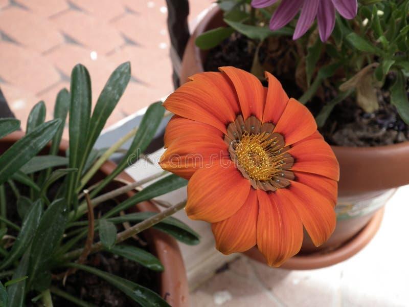 ανθίζοντας λουλούδια στοκ εικόνες με δικαίωμα ελεύθερης χρήσης
