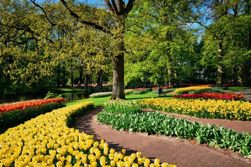 Ανθίζοντας τουλίπες flowerbeds στον κήπο λουλουδιών Keukenhof, Netherlan στοκ εικόνα