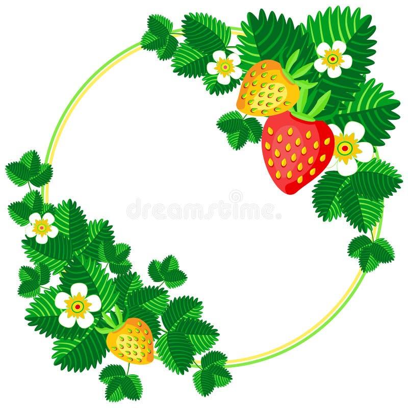 Ανθίζοντας φράουλα του Μπους με το υπόβαθρο πλαισίων μούρων και λουλουδιών για τη διανυσματική απεικόνιση κειμένων σας ελεύθερη απεικόνιση δικαιώματος
