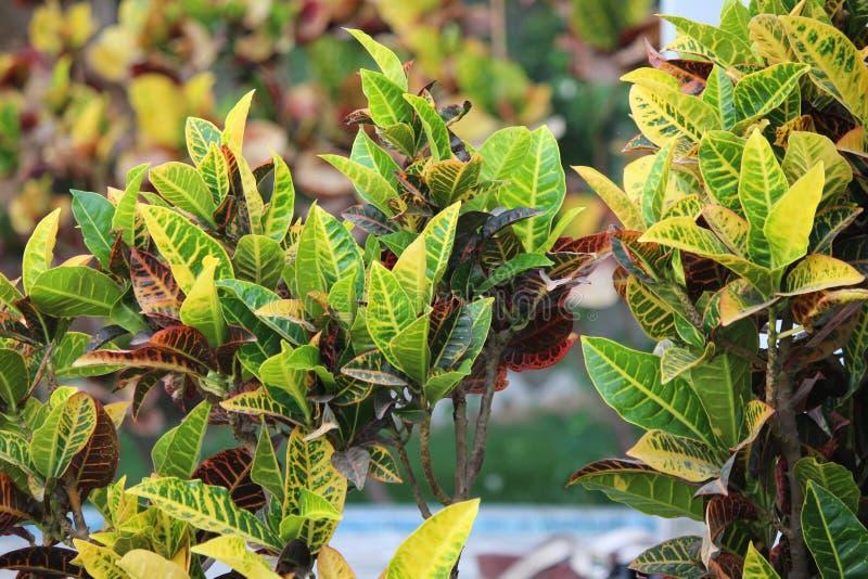 Ανθίζοντας φυτά με τα φύλλα στοκ φωτογραφίες