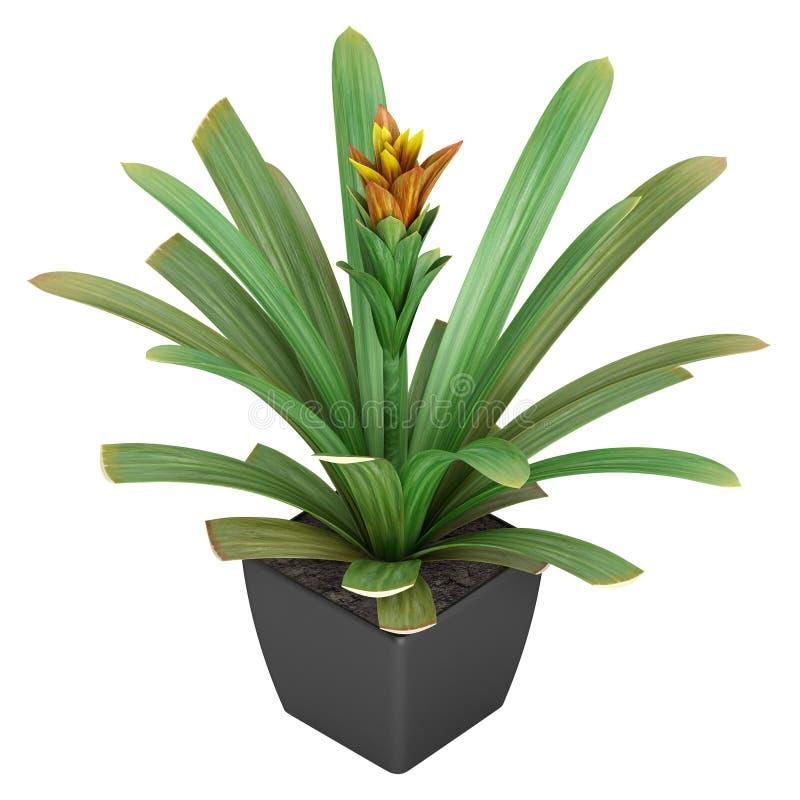 Ανθίζοντας φυτό guzmania διανυσματική απεικόνιση