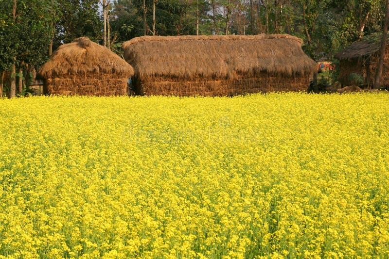 ανθίζοντας χωριό φυτών μο&upsilon στοκ φωτογραφία