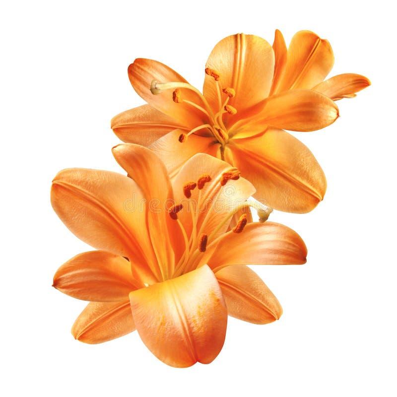 Ανθοδέσμη με έντονα πορτοκαλί λουλούδια κρίνου απομονωμένα στοκ φωτογραφία με δικαίωμα ελεύθερης χρήσης