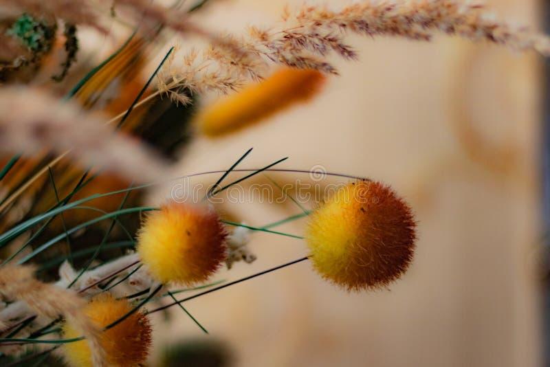 Ανθοδέσμη της χλόης λιβαδιών με τις yellow-orange σφαίρες σε μια μπεζ κινηματογράφηση σε πρώτο πλάνο υποβάθρου στοκ φωτογραφίες