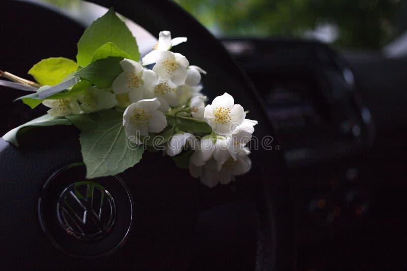 ανθοδέσμη της Jasmine που βρίσκεται στο τιμόνι του αυτοκινήτου στοκ εικόνα με δικαίωμα ελεύθερης χρήσης