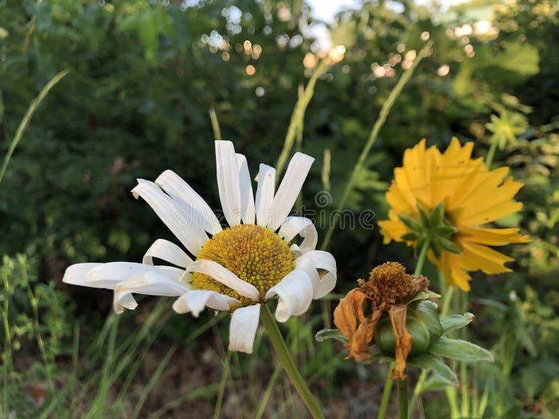 Ανθοδέσμη του λουλουδιού στη φύση στοκ εικόνα