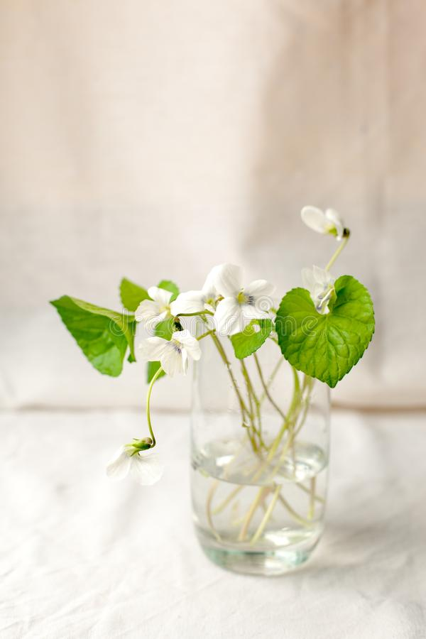 Ανθοδέσμη του λουλουδιού whitebells σε ένα βάζο γυαλιού Ιώδης ακόμα ζωή Snowdrop Floral διακόσμηση Χρονικός ελάχιστος στενός άνοι στοκ φωτογραφίες