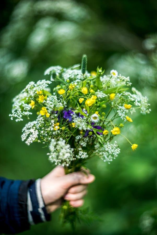 Ανθοδέσμη των άγριων λουλουδιών υπό εξέταση στοκ εικόνα με δικαίωμα ελεύθερης χρήσης