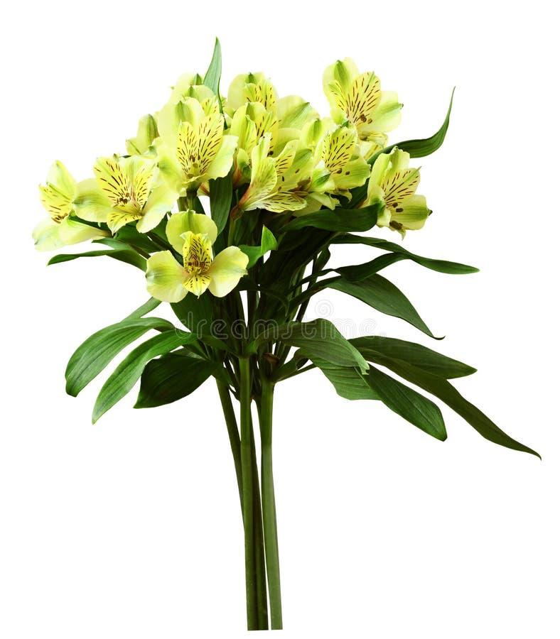 Ανθοδέσμη των κίτρινων λουλουδιών alstroemeria στοκ εικόνες