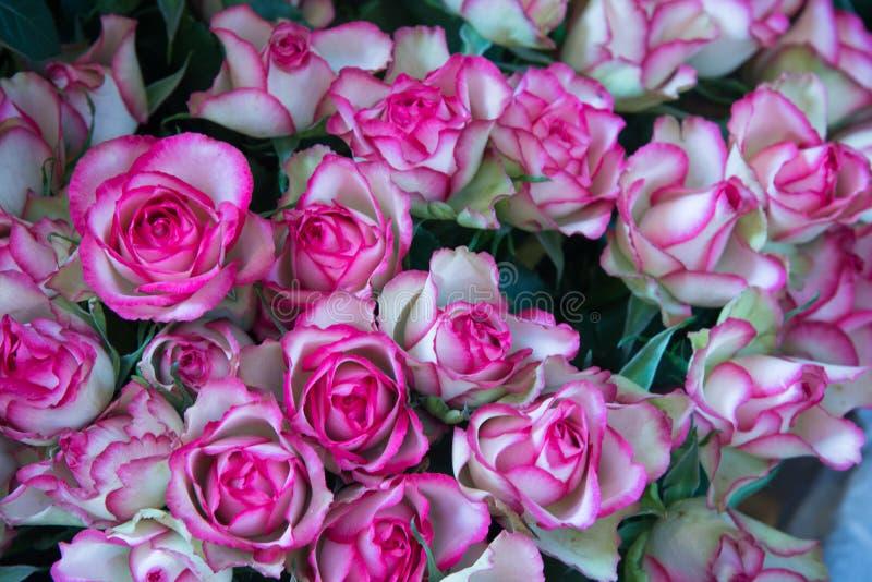 ανθοδέσμη των κόκκινων και άσπρων τριαντάφυλλων στοκ εικόνες με δικαίωμα ελεύθερης χρήσης