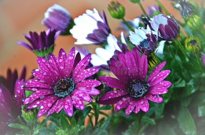 Ανθοδέσμη των λουλουδιών με τις πτώσεις της δροσιάς στοκ εικόνα με δικαίωμα ελεύθερης χρήσης