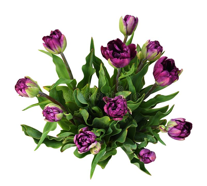 Ανθοδέσμη των πορφυρών peony λουλουδιών τουλιπών στοκ εικόνες