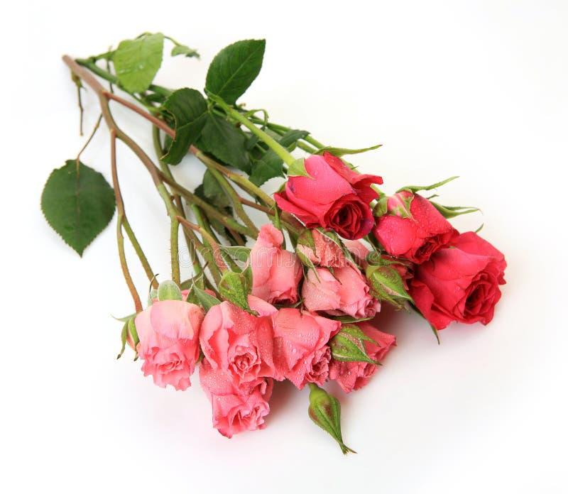 Ανθοδέσμη των τριαντάφυλλων στοκ φωτογραφίες με δικαίωμα ελεύθερης χρήσης
