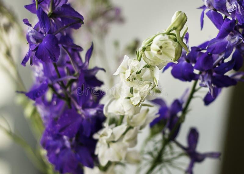 Ανθοδέσμη των όμορφων πορφυρών και άσπρων λουλουδιών στοκ φωτογραφία