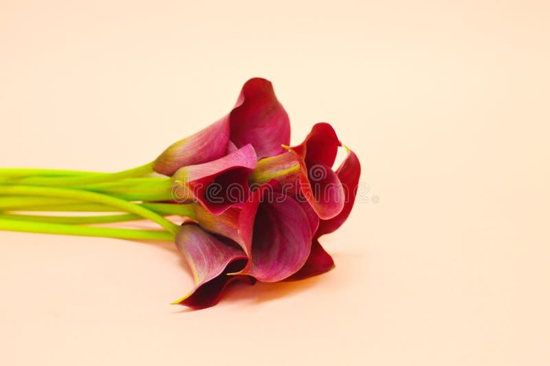 Ανθοδέσμη calla του κρίνου στοκ εικόνα με δικαίωμα ελεύθερης χρήσης