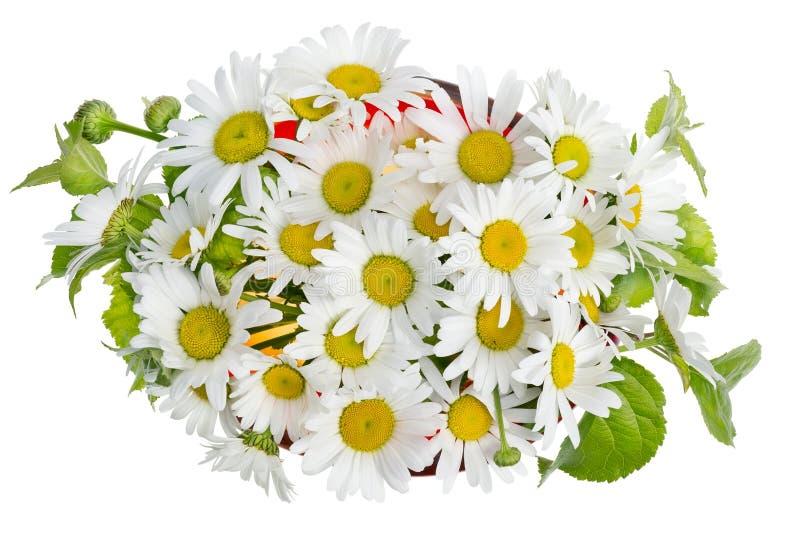 Ανθοδέσμη Minimalistic - άσπρα camomile λουλούδια στοκ φωτογραφία