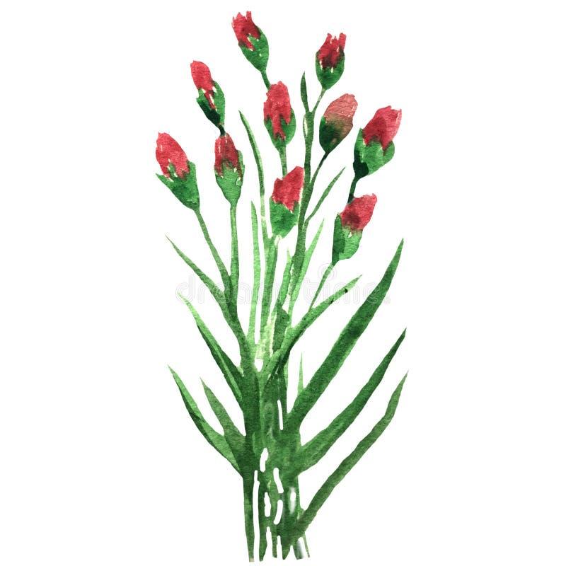 Ανθοδέσμη Watercolor των τριαντάφυλλων με τους οφθαλμούς με τα φύλλα ελεύθερη απεικόνιση δικαιώματος
