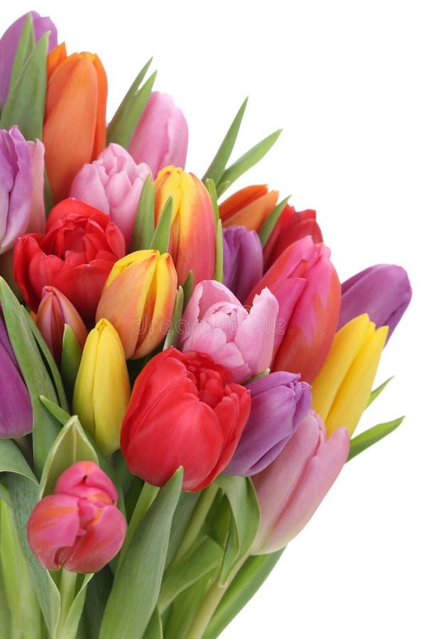 Ανθοδέσμη λουλουδιών τουλιπών την άνοιξη ή ημέρα της μητέρας που απομονώνεται στοκ φωτογραφία
