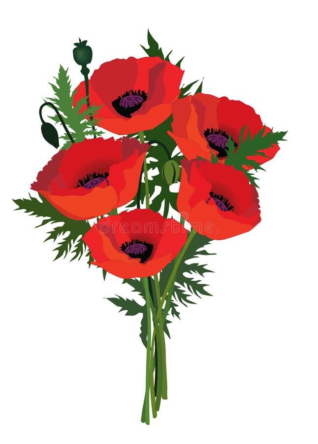 Ανθοδέσμη παπαρουνών λουλουδιών. ελεύθερη απεικόνιση δικαιώματος