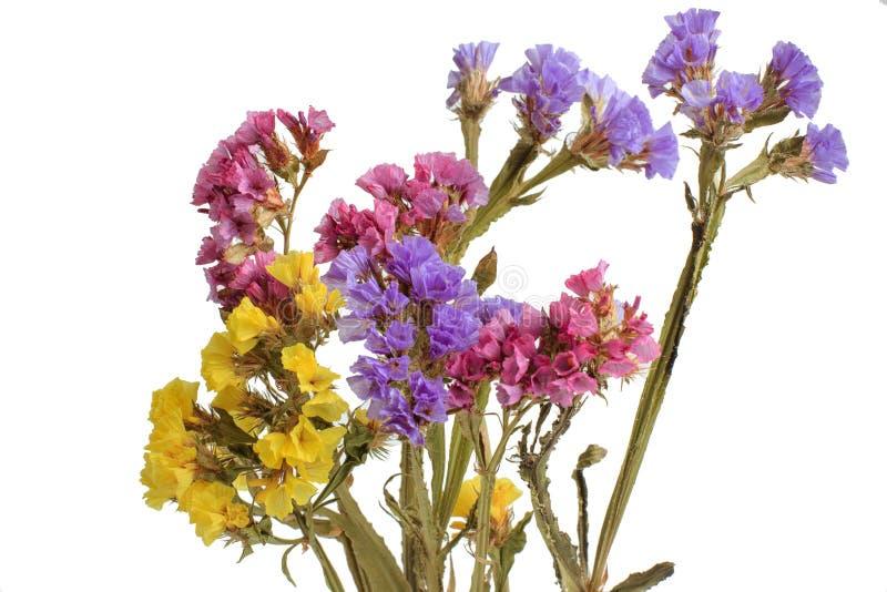 Ανθοδέσμη των ξηρών άγριων λουλουδιών που απομονώνονται στο άσπρο υπόβαθρο στοκ εικόνες