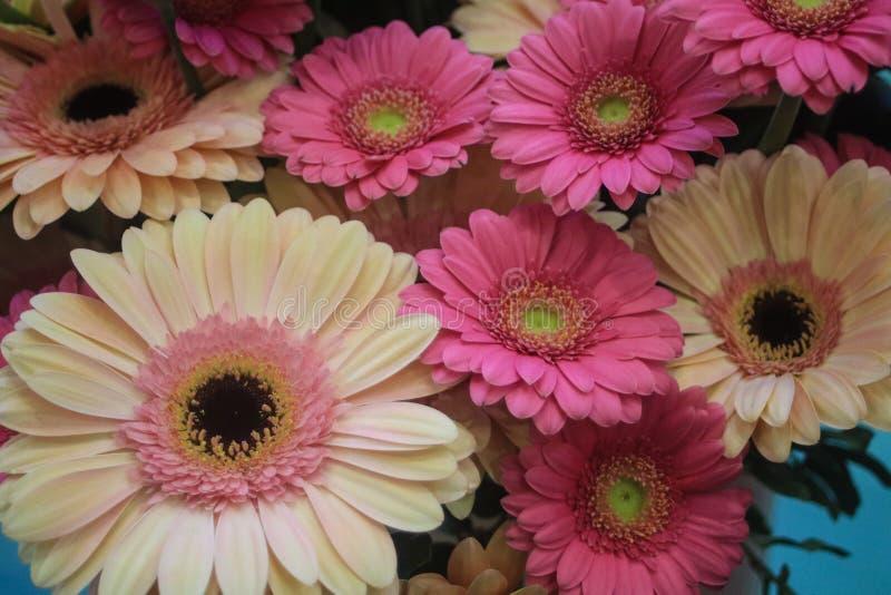 Ανθοδέσμη των ρόδινων και άσπρων λουλουδιών gerbera μικτών από κοινού στοκ φωτογραφίες