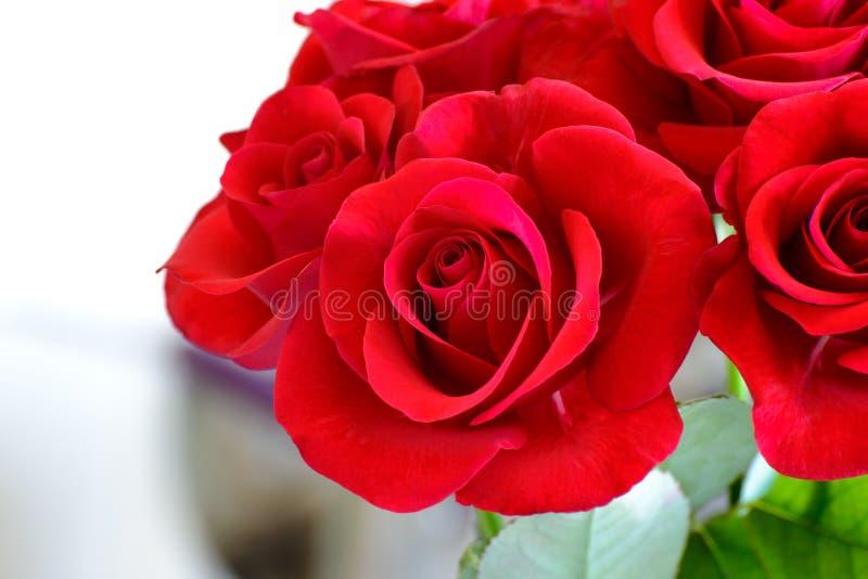 Ανθοδέσμη των όμορφων κόκκινων τριαντάφυλλων στο ελαφρύ υπόβαθρο Ευχετήρια κάρτα για την ημέρα στις 8 Μαρτίου των γυναικών στοκ φωτογραφίες