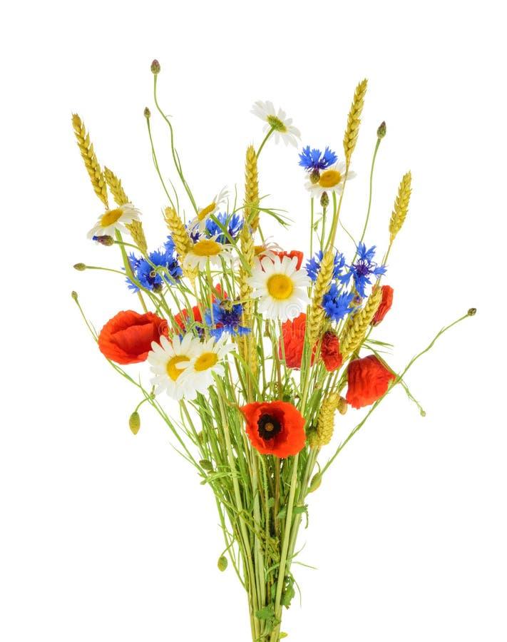 Ανθοδέσμη των όμορφων λουλουδιών Cornflowers, chamomiles σίτος και στοκ εικόνες