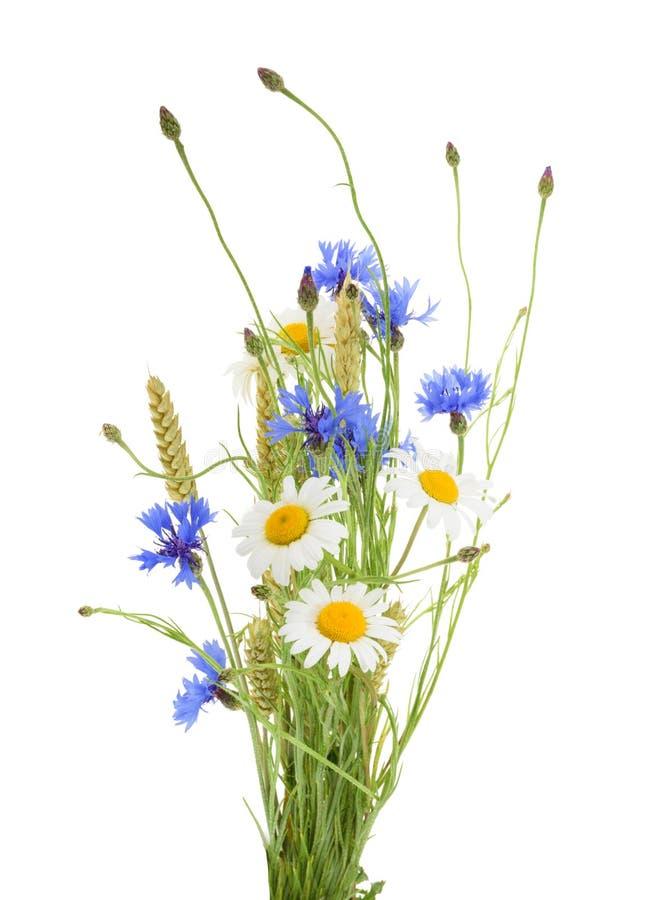 Ανθοδέσμη των όμορφων λουλουδιών Cornflowers, chamomiles σίτος ISO στοκ εικόνες με δικαίωμα ελεύθερης χρήσης