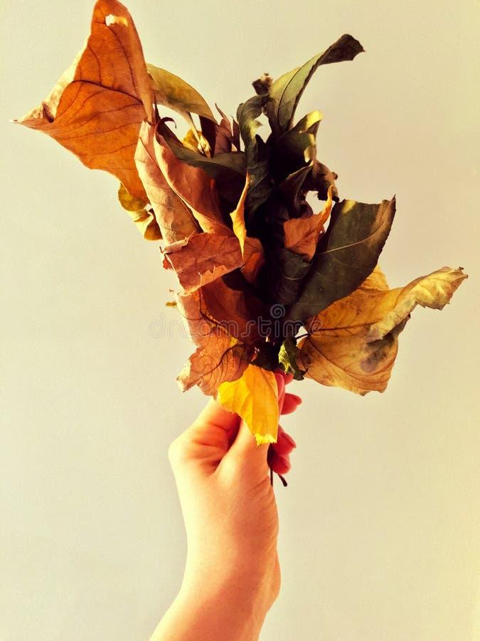 Ανθοδέσμη φθινοπώρου στοκ εικόνες