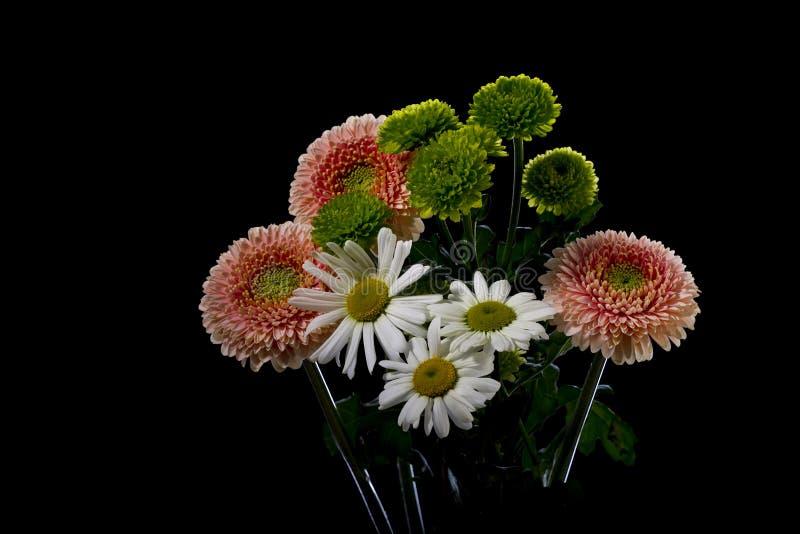 Ανθοδέσμη Gerbera και chamomile στοκ εικόνες