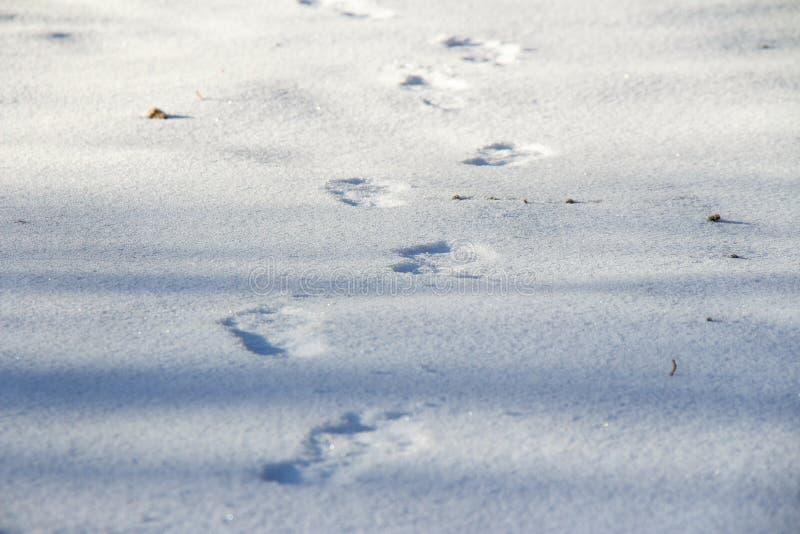 Ανθρώπινα ίχνη στο καθαρό άσπρο χιόνι το χειμώνα στοκ φωτογραφία με δικαίωμα ελεύθερης χρήσης